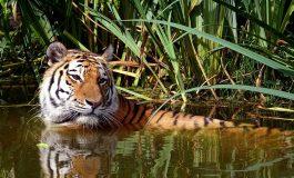 Klub Południk w Muzeum Miejskim - Na tygrysim lądzie