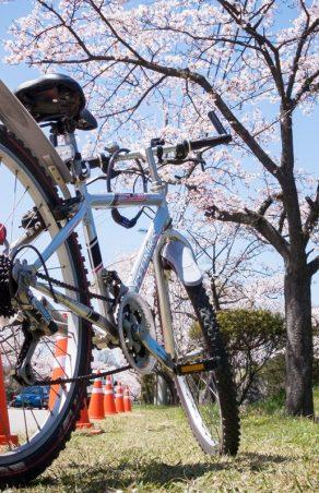Wycieczka rowerowa do Muzeum Szenderów w Suszcu