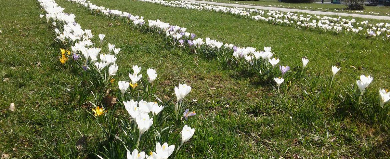 Tychy w wiosennej odsłonie