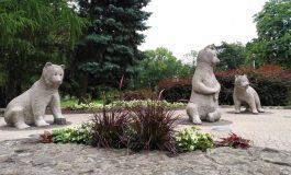 Misia, Tysio i Gutek to imiona misiów z Parku Niedźwiadków