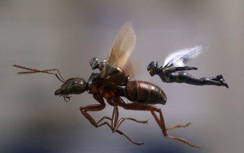 Maraton filmowy ENEMEF: Minimaraton Ant-Man - Konkurs