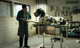 """Dyskusyjny Klub Filmowy - """"Dogman"""" w Andromedzie"""