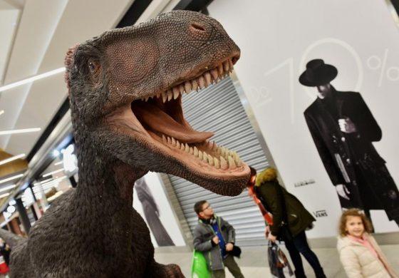 Wystawa skamielin i dinozaurów do końca stycznia w tyskim Gemini