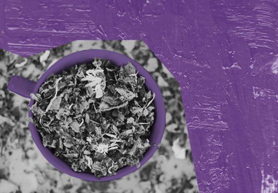 Warsztaty ziołowo-herbaciane – Eko Przystanek w Wilkowyjach